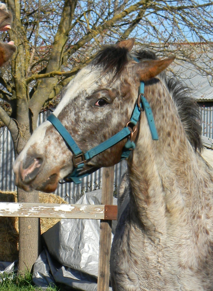 Heads or Tails - The Literate Equine